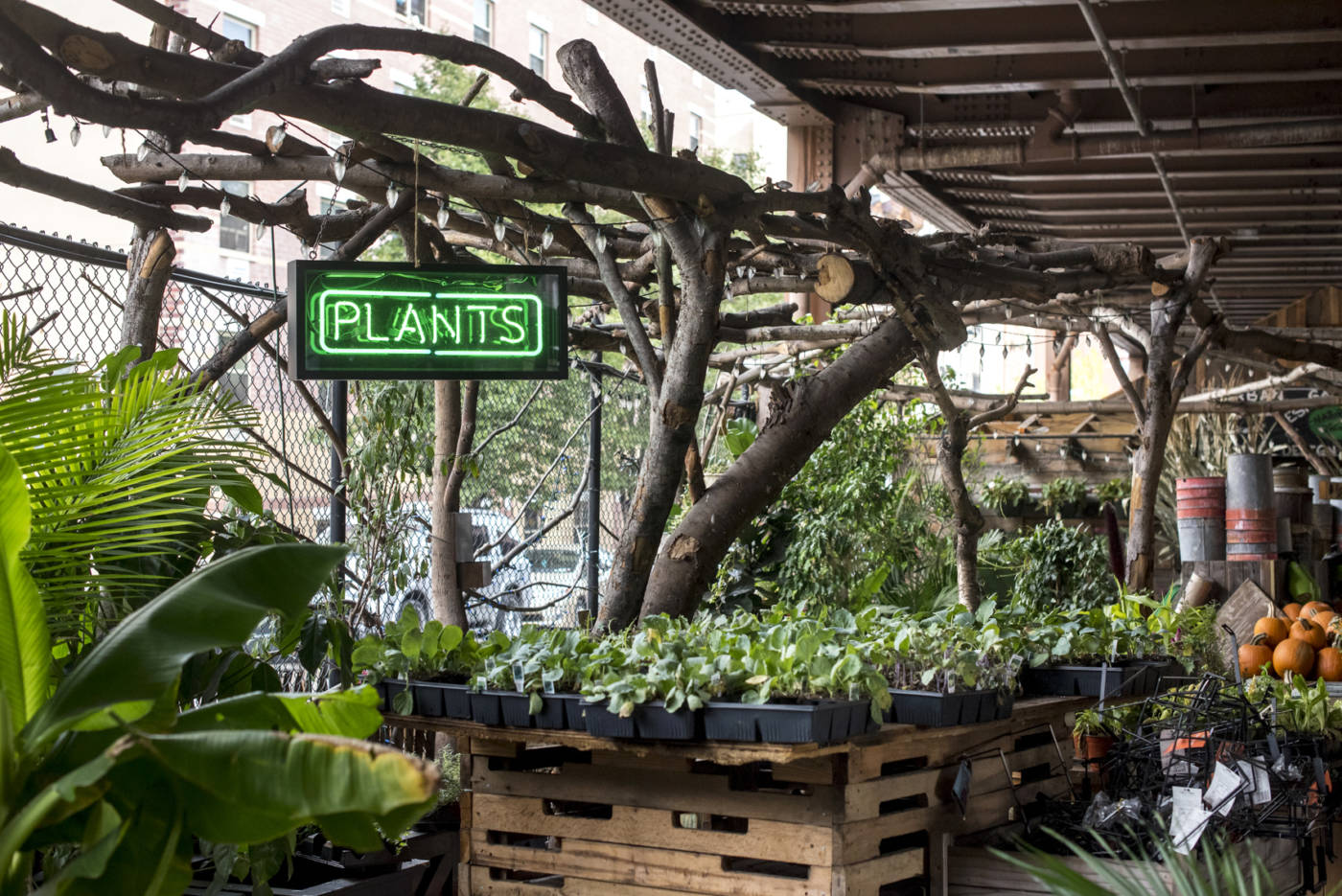 The Urban Garden Center Brings Gardening To Every New Yorker