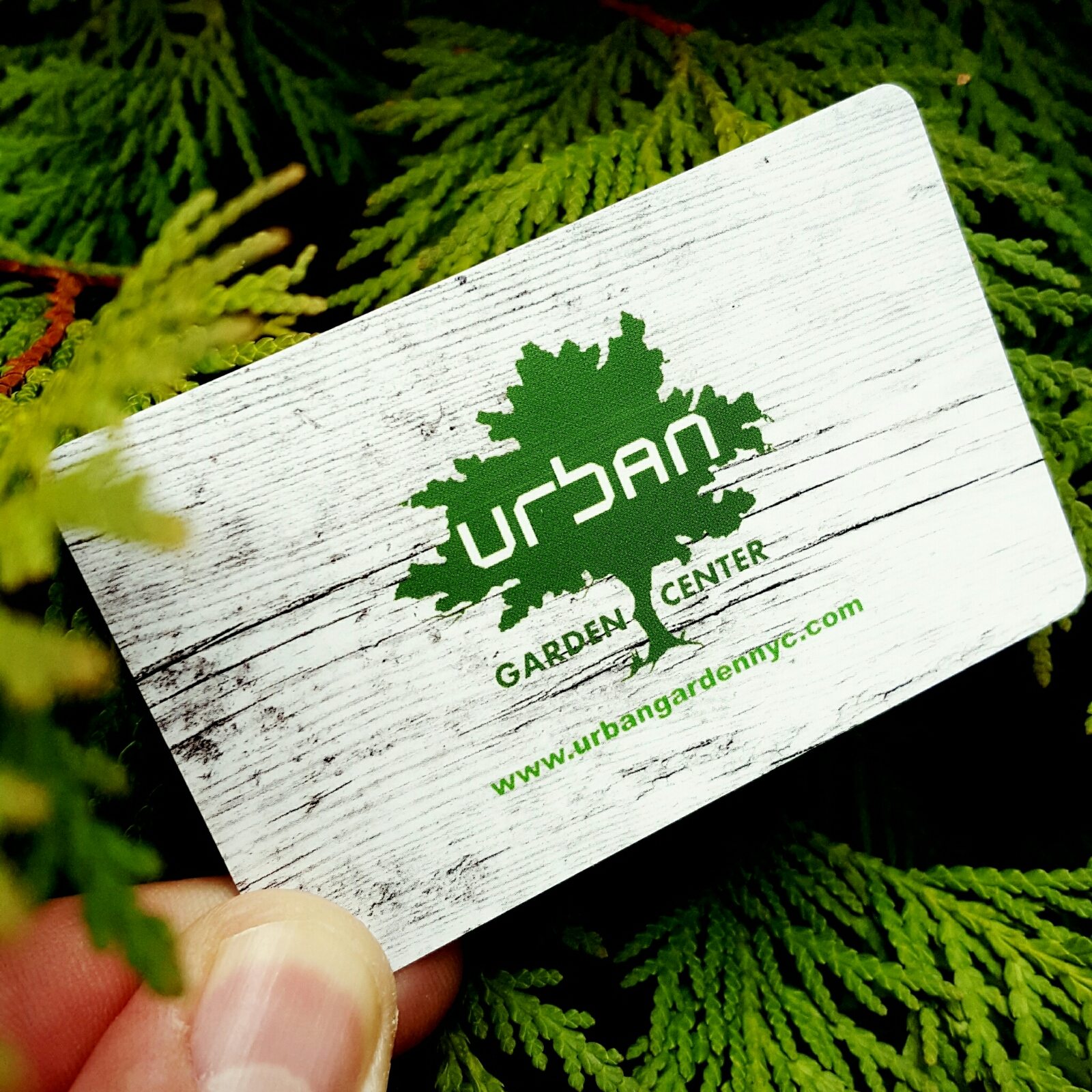 Gift cards now available gift cards now available reheart Gallery