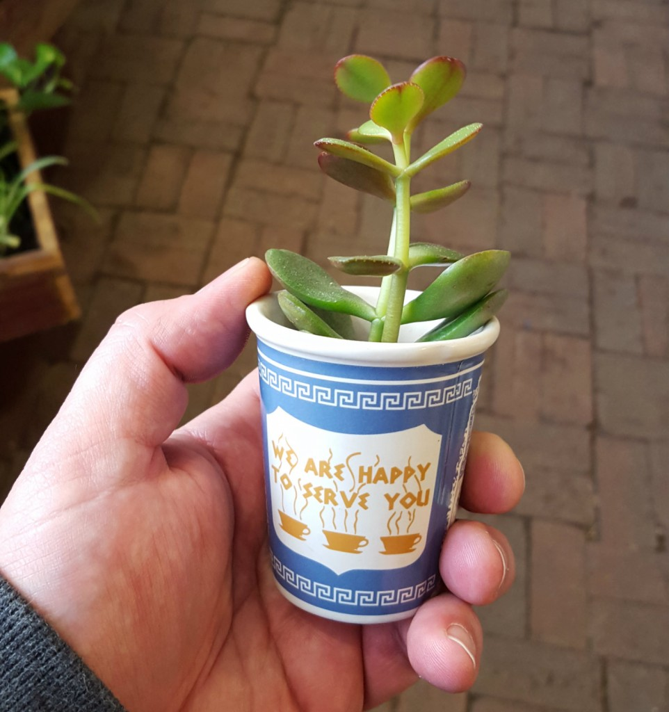 cup o succulent